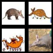 4 Pics 1 Word 8 Letters Answers Aardvark