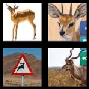 4 Pics 1 Word 8 Letters Answers Antelope