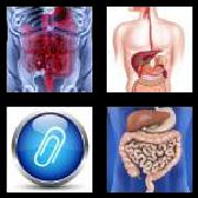 4 Pics 1 Word 8 Letters Answers Appendix