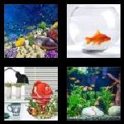 4 Pics 1 Word 8 Letters Answers Aquarium