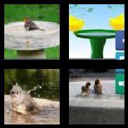 4 Pics 1 Word 8 Letters Answers Birdbath
