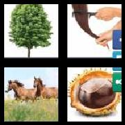 4 Pics 1 Word 8 Letters Answers Chestnut