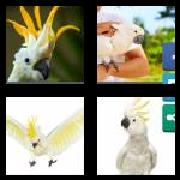 4 Pics 1 Word 8 Letters Answers Cockatoo