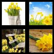 4 Pics 1 Word 8 Letters Answers Daffodil
