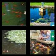 4 Pics 1 Word 8 Letters Answers Fishpond