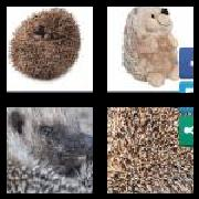 4 Pics 1 Word 8 Letters Answers Hedgehog