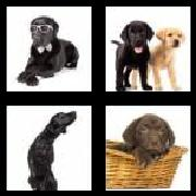 4 Pics 1 Word 8 Letters Answers Labrador