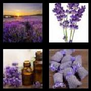 4 Pics 1 Word 8 Letters Answers Lavender
