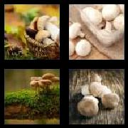 4 Pics 1 Word 8 Letters Answers Mushroom