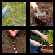 4 Pics 1 Word 8 Letters Answers Planting
