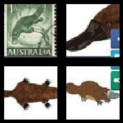 4 Pics 1 Word 8 Letters Answers Platypus