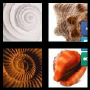 4 Pics 1 Word 8 Letters Answers Seashell