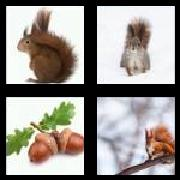 4 Pics 1 Word 8 Letters Answers Squirrel