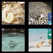 4 Pics 1 Word 8 Letters Answers Stingray
