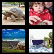 4 Pics 1 Word 8 Letters Answers Tortoise