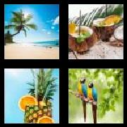 4 Pics 1 Word 8 Letters Answers Tropical