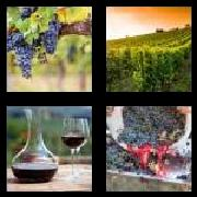 4 Pics 1 Word 8 Letters Answers Vineyard
