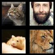 4 Pics 1 Word 8 Letters Answers Whiskers