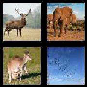 4 Pics 1 Word 8 Letters Answers Wildlife