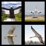 4 Pics 1 Word 8 Letters Answers Wingspan