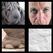 4 Pics 1 Word 8 Letters Answers Wrinkled